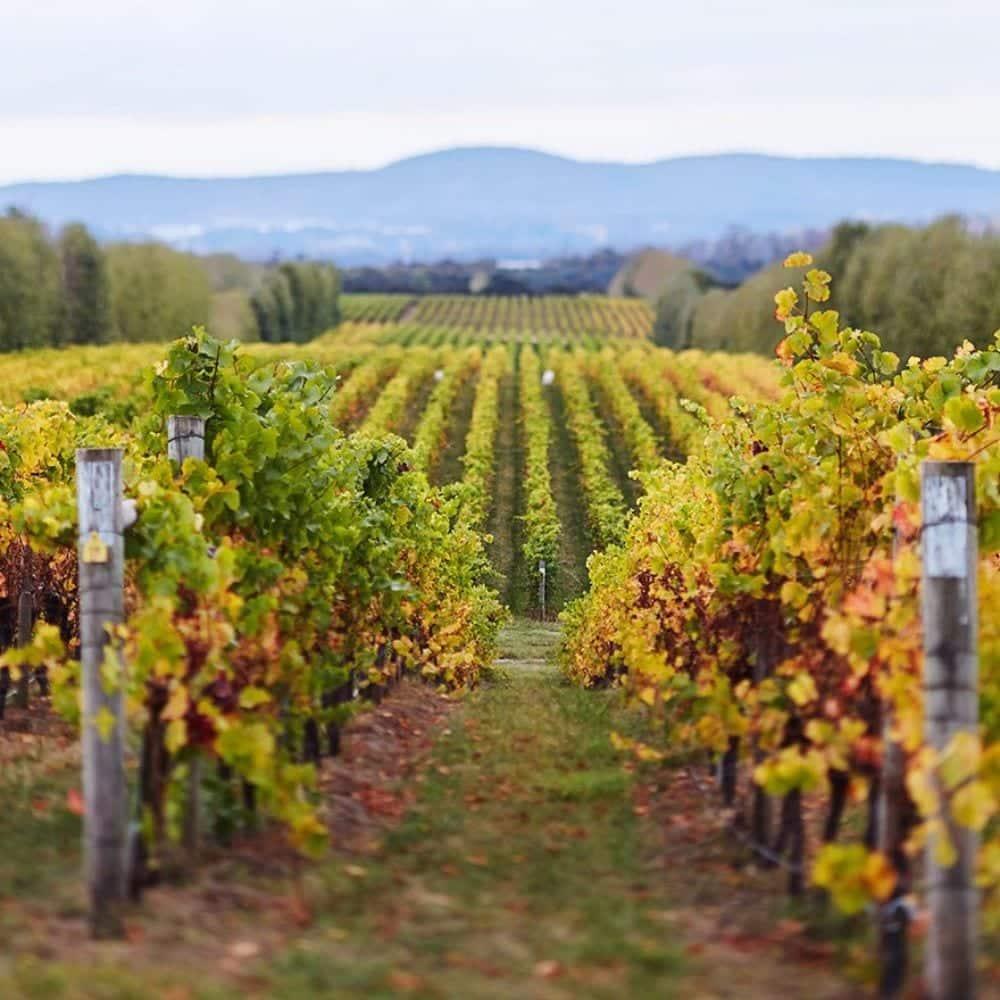 Tamar-Ridge-Wines-Vineyard.jpg